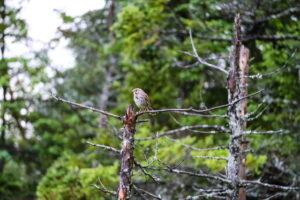 Bird at Belchers Marsh